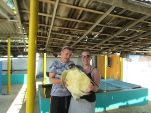 Turtle Hatchery